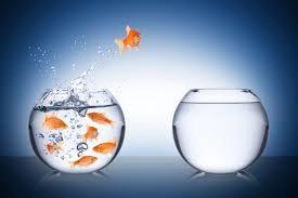 Fish making the jump